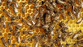 Bees cool your home stock video footage