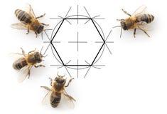 Bees and drawing honeycombs Royalty Free Stock Photo