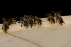 Bees while drinking water Royalty Free Stock Image