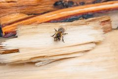 Bees drinking water in the summer. Busy bees, close up view of the working bees. Bees close up showing some animals drinking water stock photos