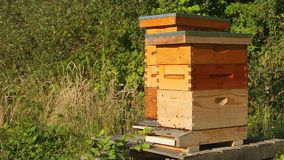 Bees Enter and Exit Hives on a Farm stock footage
