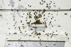Bees entering the hive Royalty Free Stock Images