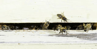 Bees Entering The Hive Stock Photos