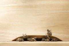 Bees at entrance to beehive Stock Photography