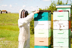 Bees excited when hives disturbed Royalty Free Stock Photography