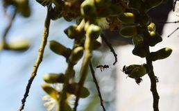 Bees feeding palm Stock Images