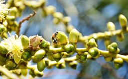 Bees feeding palm Royalty Free Stock Images
