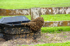 Bees finding a new home on a cattle trough Stock Image