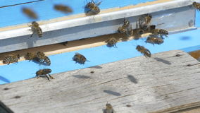 The bees flew into the hive with honey stock footage