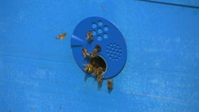 The bees flew into the hive with honey stock video footage