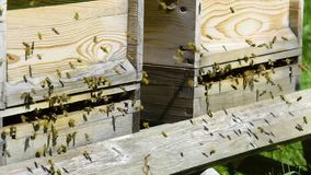 Bees in flight to their hive stock video footage