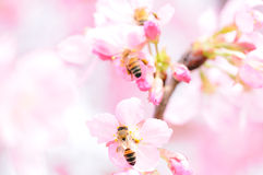 Bees and Flower Royalty Free Stock Photos