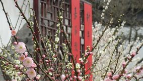 Festival and flowers. Chinese New Year`s Spring Festival royalty free stock photography