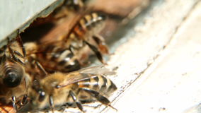 Bees fly from beehive stock video