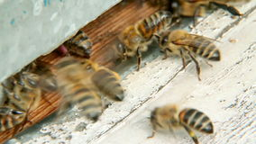 Bees fly into  beehive 2 stock footage