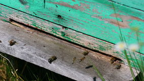 Bees fly and take off from a beehive stock footage