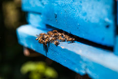 Bees fly to the hive Stock Photo