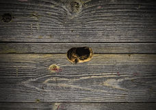 Bees fly in a wooden beehive Stock Image