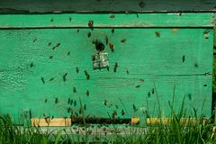 Bees fly into a wooden colored beehive. Beekeeping work on the apiary. Selective focus. Horizontal frame stock photography
