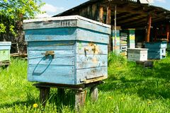 Bees fly into a wooden colored beehive. Beekeeping work on the apiary. Selective focus. Horizontal frame stock image