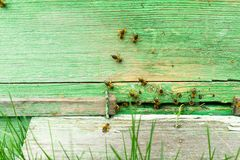 Bees fly into a wooden colored beehive. Beekeeping work on the apiary. Selective focus. Horizontal frame royalty free stock photos