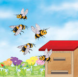 Bees flying around the beehive Stock Photo