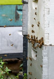Bees flying around beehive Stock Photos