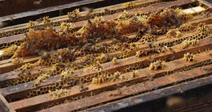 Bees flying around the hive during the harvesting honey