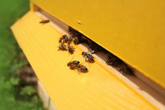 Bees flying around their beehive Stock Photos