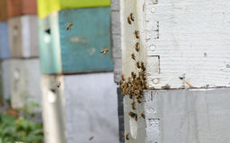 Bees flying and beehives or apiary Royalty Free Stock Photography