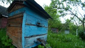 Bees are flying into blue beehive wooden boxes in the garden in the ukrainian vilage. stock footage