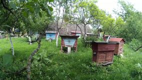 Bees are flying into blue beehive wooden boxes in the garden in the ukrainian vilage. stock video footage