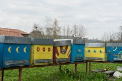 Bees flying in front of the hive entry. Some Hives in a meadow stock images