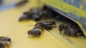 Bees flying into a hive stock video footage
