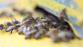 Bees flying into a hive stock footage