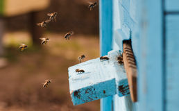 Bees flying into the hive Stock Photo