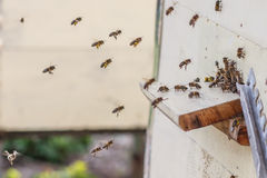 Bees flying into the hive Stock Images