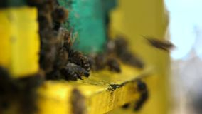 Bees stock footage
