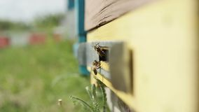 Bees flying out of the hive stock footage