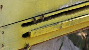 Bees flying from their hive stock video footage