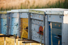 Bees flying to the hive Royalty Free Stock Photography