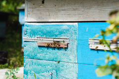 Bees at front hive entrance. Stock Photos