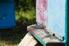 Bees at front hive entrance. Stock Photo