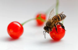 Bees and fruit Stock Images