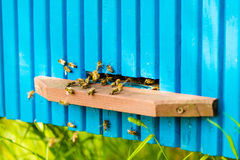 Bees are going in and out of their beehive Royalty Free Stock Images