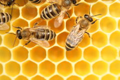 Bees are going Stock Images