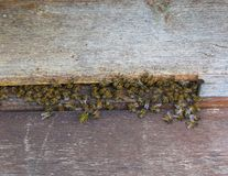 Bees in gray hives on a sunny day in the garden royalty free stock photos