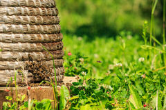 Bees in hey beehive Stock Images
