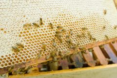 Bees in the hive. Bees royalty free stock photography