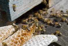 Bees on hive 14 Royalty Free Stock Images